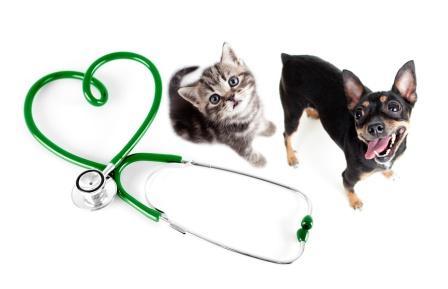 Krankes Herz bei Hunden und Katzen